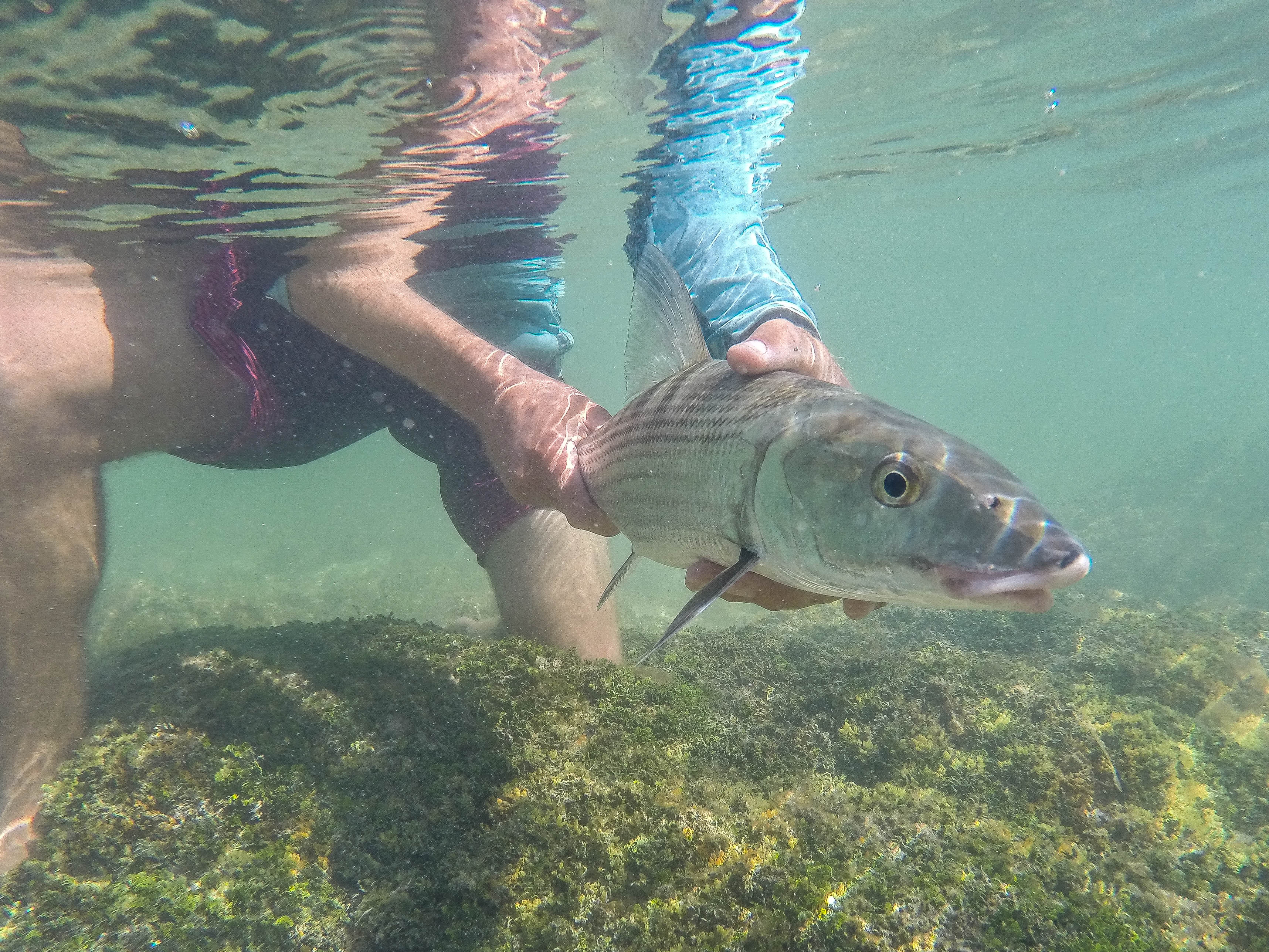 Bonefishing key west tailing water expeditions flats for Bone fishing key west